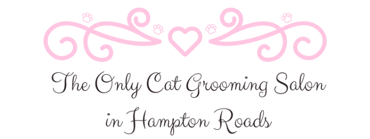 The only cat grooming salon in Hampton Roads Virginia